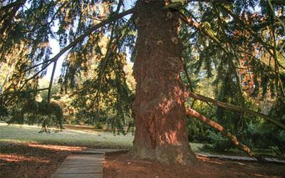 Arboretum Americká zahrada
